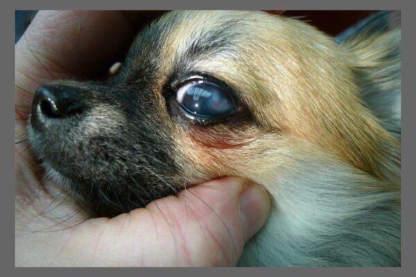 Øjenkontrol 5 uger efter operation efter perforation i dorsolaterale 2